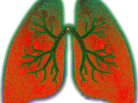 Gegen Corona Virus Ängste empfiehlt die Harvard Medical School Yoga und Meditation.