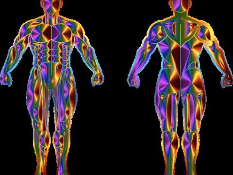 Verbindet Yoga Muskeln und Psyche