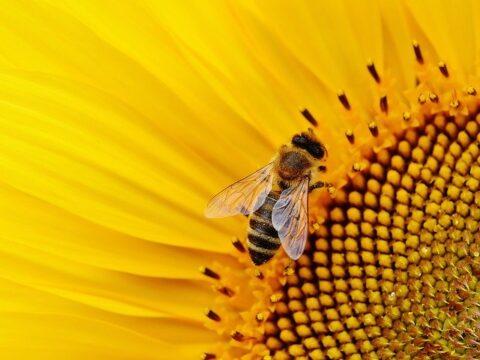 Bienenatmung - Bhrahmari Pranayama