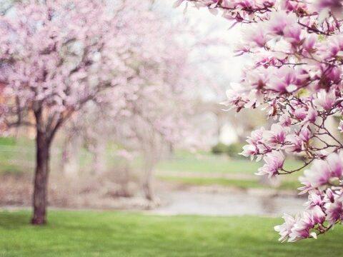 Yoga - von wegen Frühlingsmüdigkeit